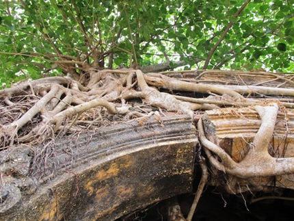 """Ngôi đình cổ """"độc nhất vô nhị"""" nằm trong lòng cây bồ đề 3"""