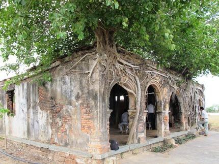 """Ngôi đình cổ """"độc nhất vô nhị"""" nằm trong lòng cây bồ đề 8"""