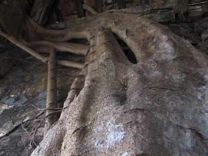 """Ngôi đình cổ """"độc nhất vô nhị"""" nằm trong lòng cây bồ đề 5"""
