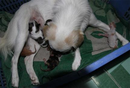 Mèo con bú sữa chó mẹ 1